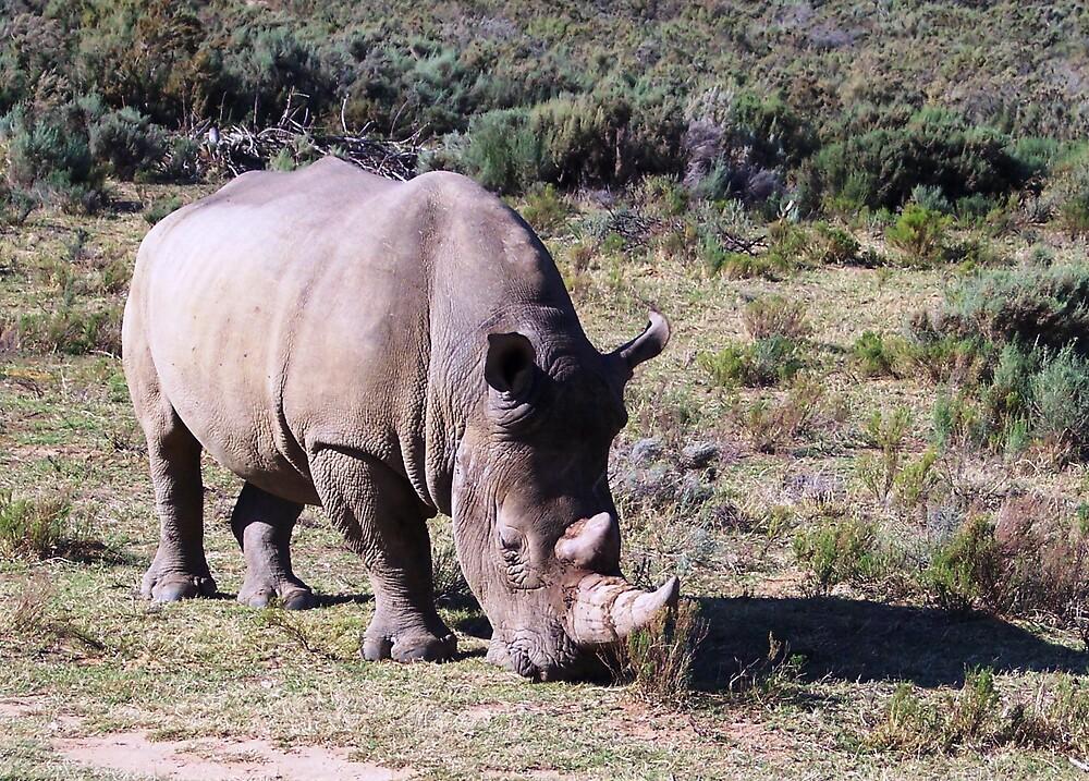 White Rhino by Braedene