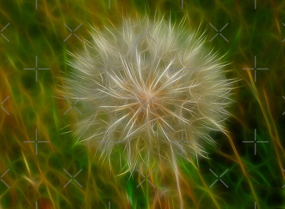 Common Goat's-Beard by Vickie Emms