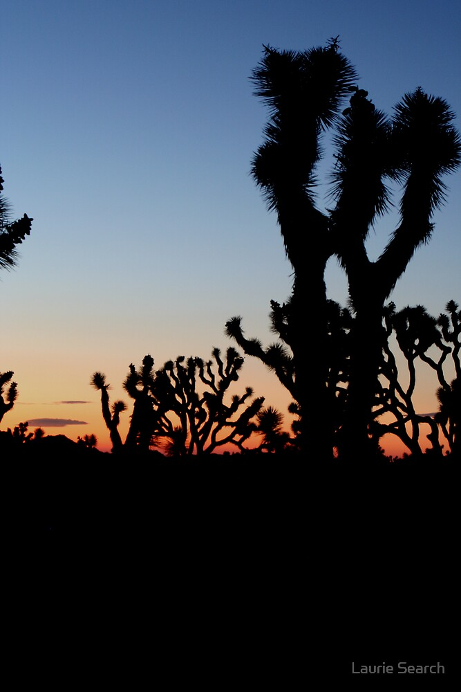 Beauty in the Desert by Laurie Search