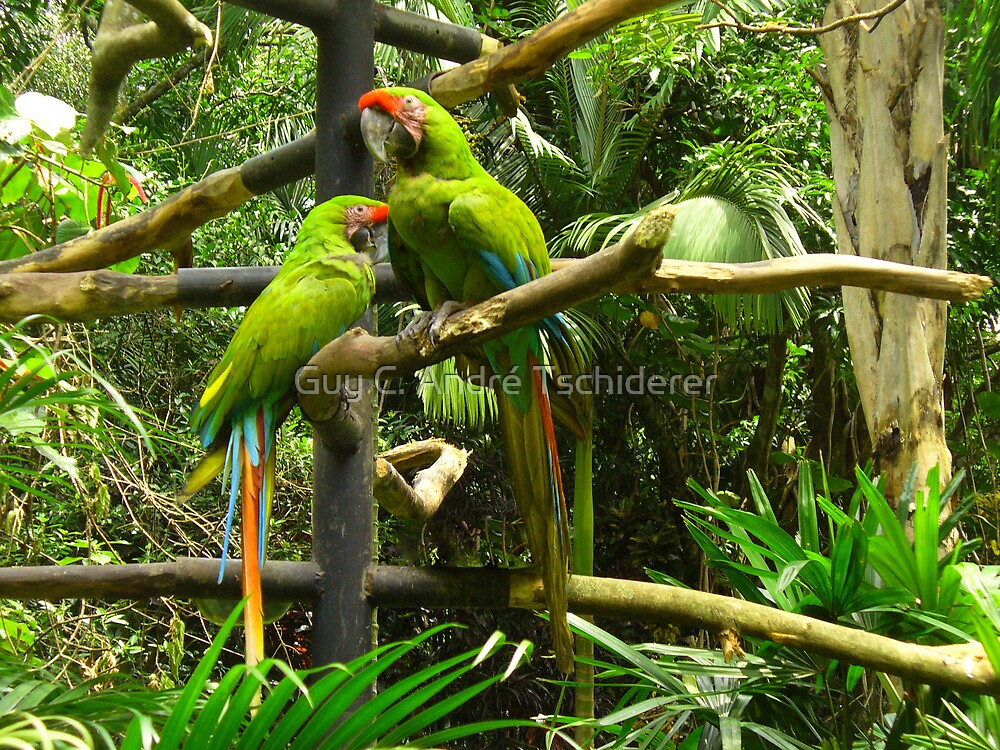 The odd couple, Costa Rica by Guy C. André Tschiderer