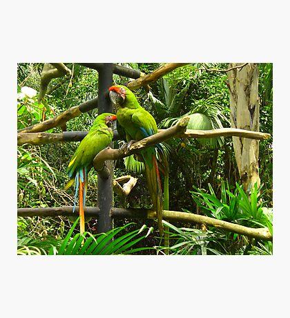 The odd couple, Costa Rica Photographic Print