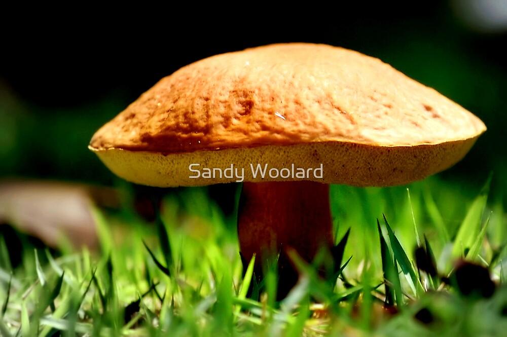 Under the Mushroom by Sandy Woolard