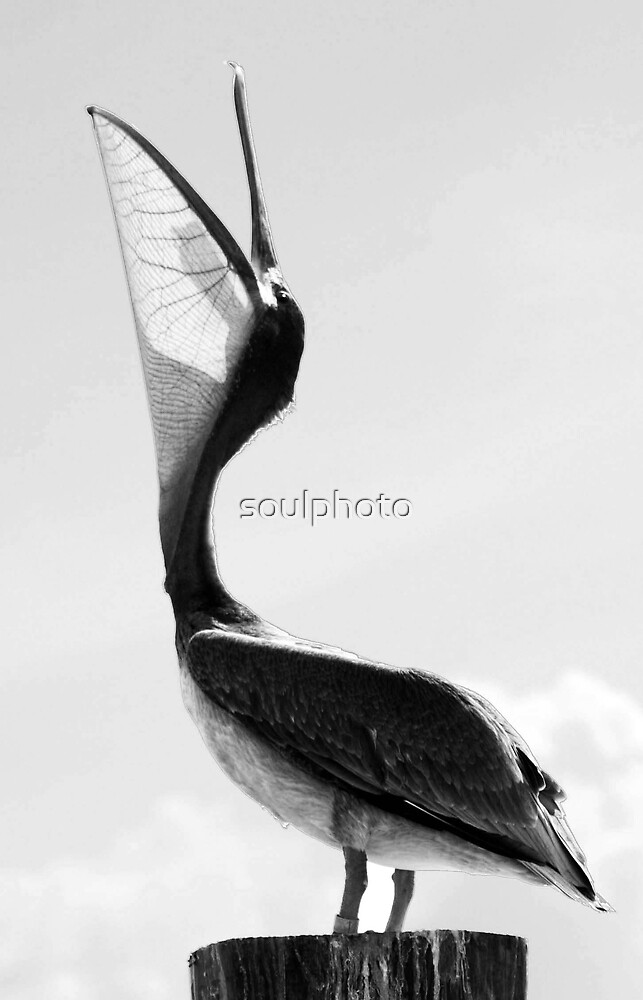 Call of the Pelican by soulphoto