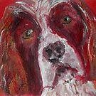 English Springer Spaniel Dog by carolineskinner
