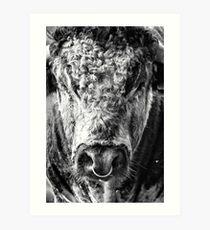 English Longhorn Bull Art Print