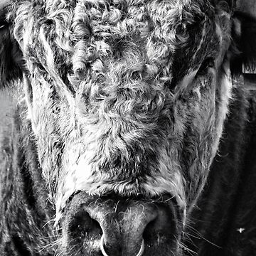 English Longhorn Bull by InspiraImage