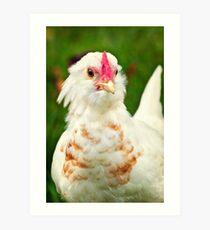 White Barbu d'Uccle bantam chicken Art Print