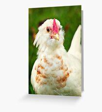 White Barbu d'Uccle bantam chicken Greeting Card