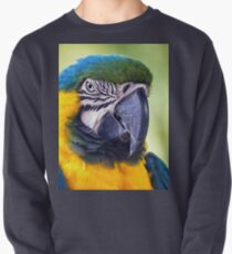 Macaw Parrot Pullover