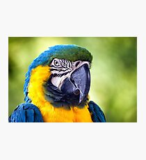 Macaw Parrot Photographic Print