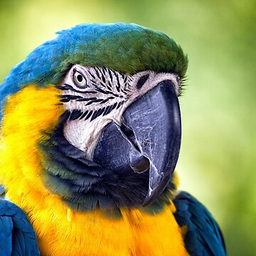 Macaw Parrot by InspiraImage