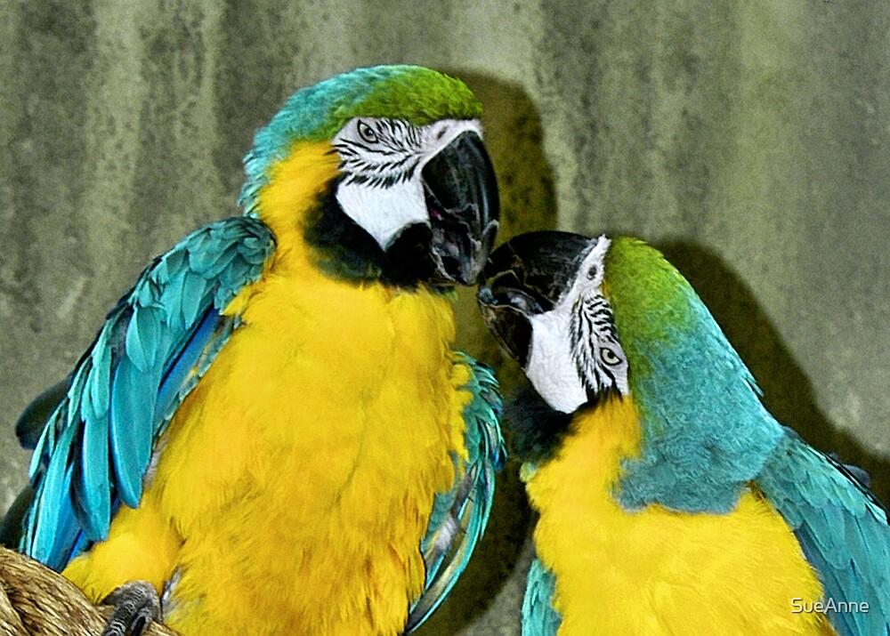 Beak to Beak by SueAnne