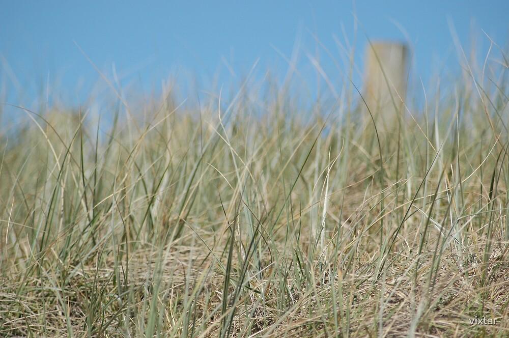 beach grass by vixtar