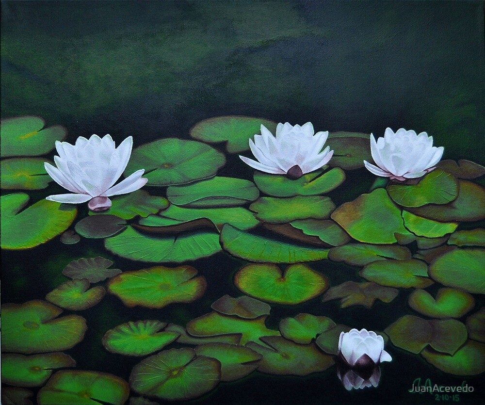 Water Lily Flowers Acrylic Painting By Juanacevedo Redbubble