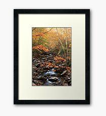 Nature's Splendor  Framed Print
