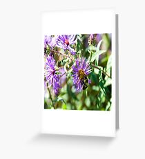 Bumble Bee Finding Pollen Greeting Card