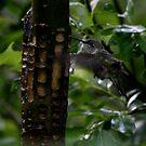 hummingbird by Danielle  Kay