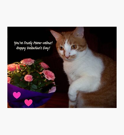 You're Truely Meow-velous ~ Happy Valentine's Day! Photographic Print