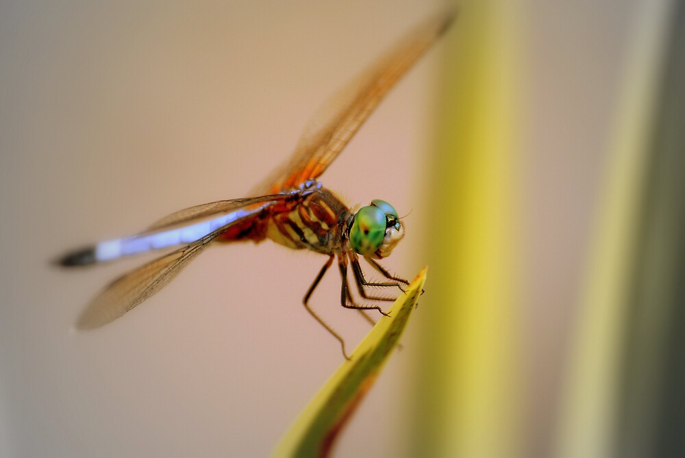 Dragonflying by MarcoMeyo18
