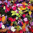 Quebec Fallen Leaves by Dana Roper