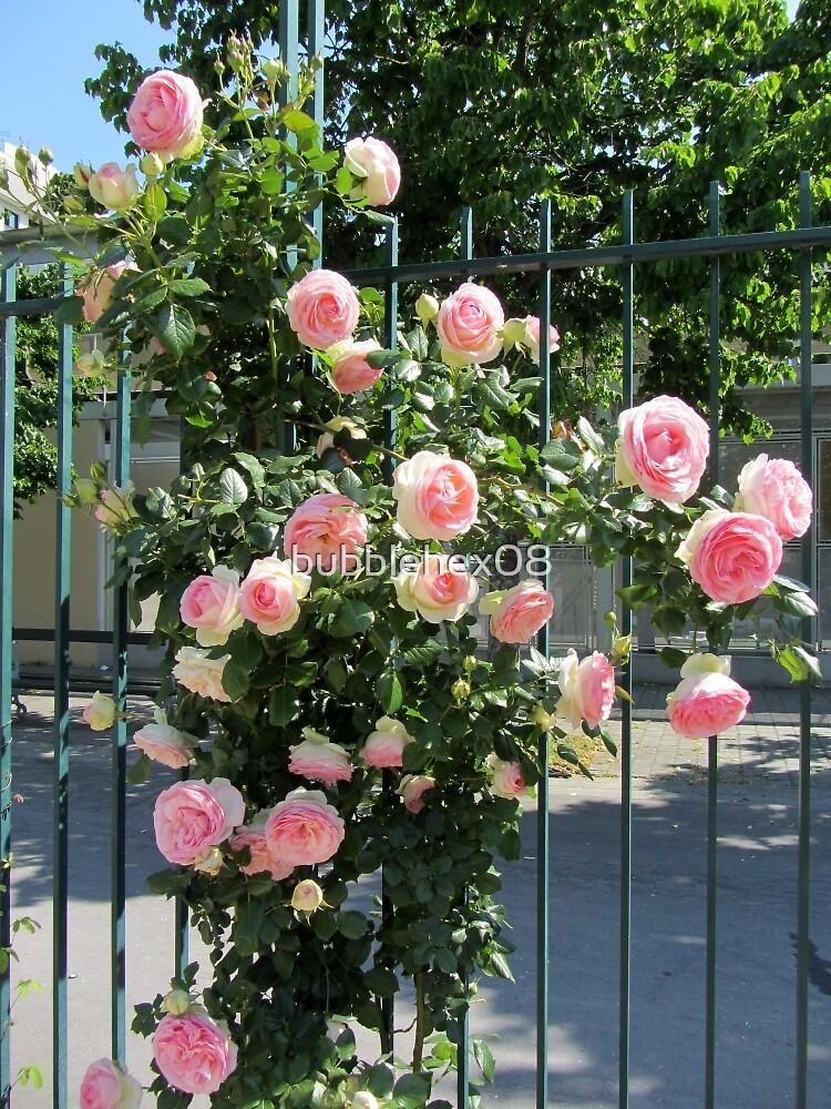 Lovely rose garden by bubblehex08