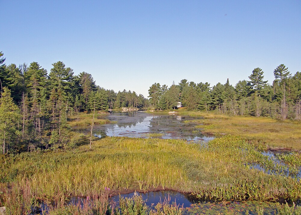 Swampscape View iN Northern Ontario by marchello