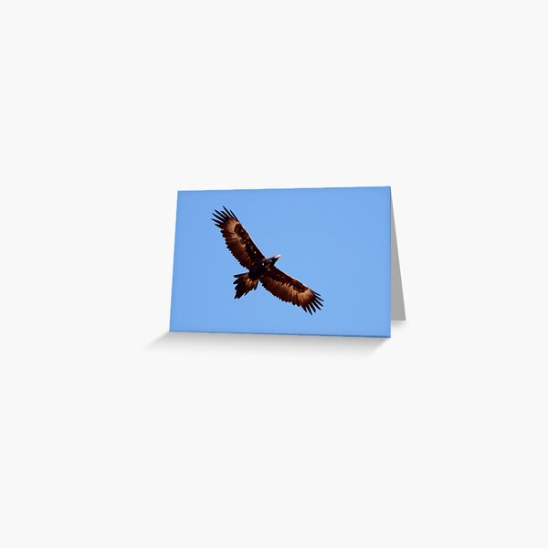 Wedge-tailed Eagle ~ Soar High Fly Free Greeting Card