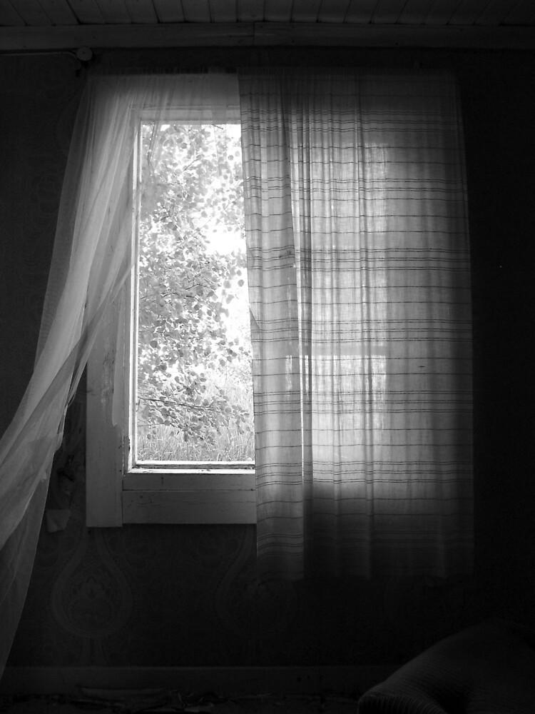 'Endless Summer' by Petri Volanen