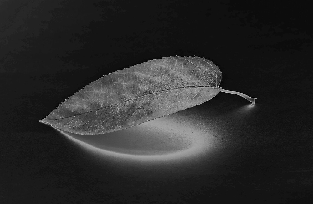 Variation on a leaf by mausue