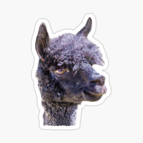 Happy Alpaca Sticker