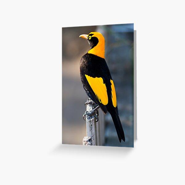 Regent Bower Bird - Lamington National Park, Australia Greeting Card