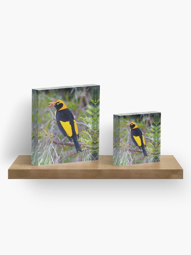 Alternate view of Regent Bower Bird, Lamington National Park, Australia Acrylic Block