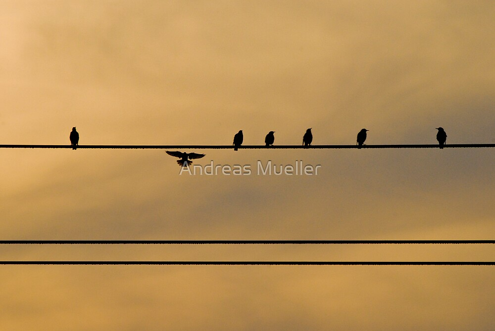 The Wire by Andreas Mueller