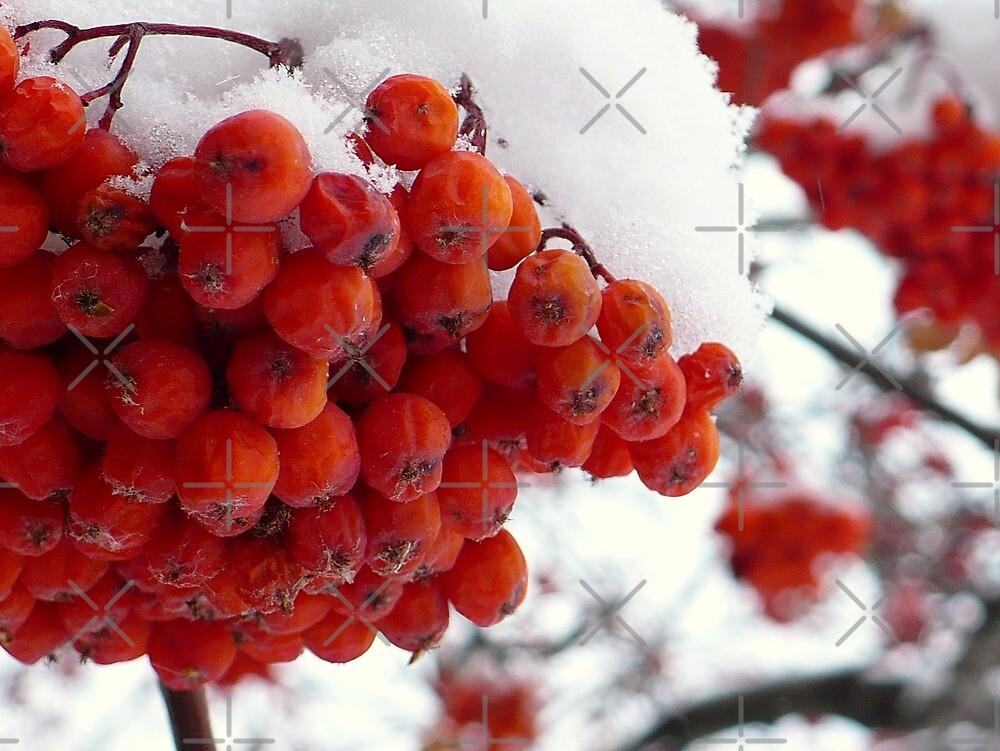 Berrylicious Beauties  by Linda Bianic