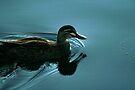 Darkwing Duck Enlightened by Jason Asher