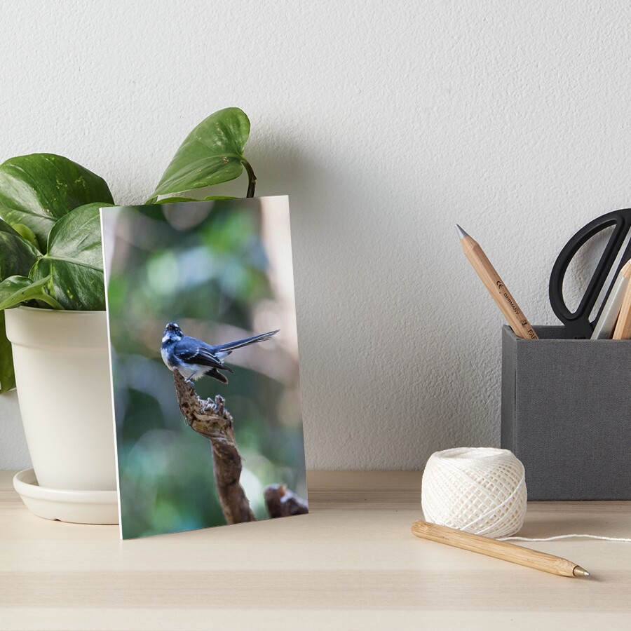 Grey Fantail, Lamington National Park, Australia Art Board Print
