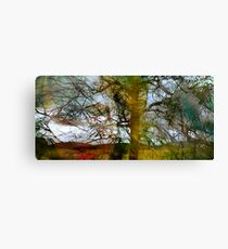 tasseomancy in a forest Canvas Print