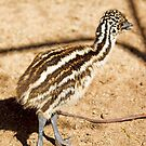 Baby Emu by Richard  Windeyer