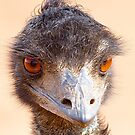 Emu Eyes by Richard  Windeyer