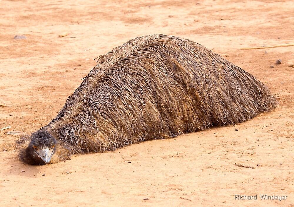Flat Out Emu by Richard  Windeyer