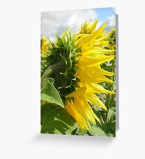Sunflower sepals Greeting Card