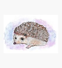 Watercolor Hedgehog Photographic Print