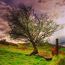 Lonesome Mountain tree by doublevision
