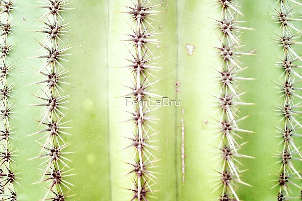 Cactus by FemLaBru