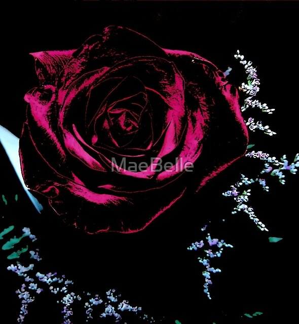 Rose on Black by MaeBelle