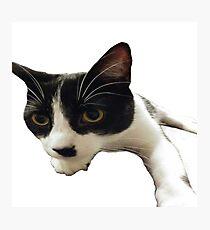 Mr Hitler Kitty - Sticker Photographic Print
