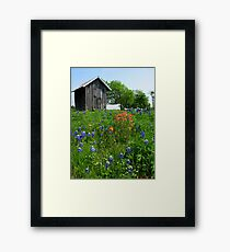 Bluebonnet Outhouse © Framed Print