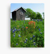 Bluebonnet Outhouse © Canvas Print