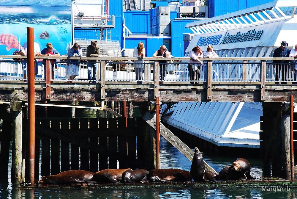 Bay Watch Sunbathers by Marylamb