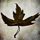 Leaf #1 by David Eastham